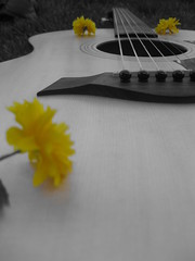 Guitar 1 (patrikigirl) Tags: summer white black flower grass yellow guitar taylor acoustic strings pickguard