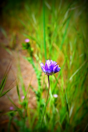 The Lone Wildflower