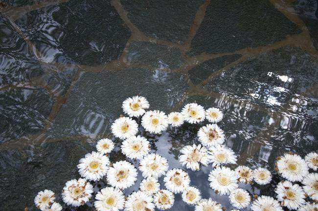 blomsterdamm