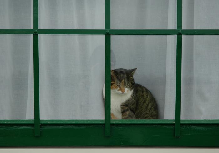 автопортрет с голландской кошкой