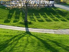 Shadows of Golf Carts and Tree (JeffStewartPhotos) Tags: trees lake ontario canada green grass club golf shadows country pike carts greengrass pikelake golfcarts mountforest pikelakegolfandcountryclub