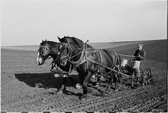 [Corn planting, Jasper County, Iowa] (LOC)