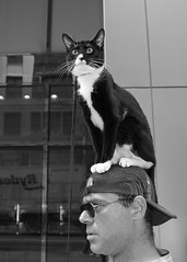 Cat on the Hat (Harrier) Tags: nyc newyorkcity blackandwhite bw hat cat tiimessquare catisahat