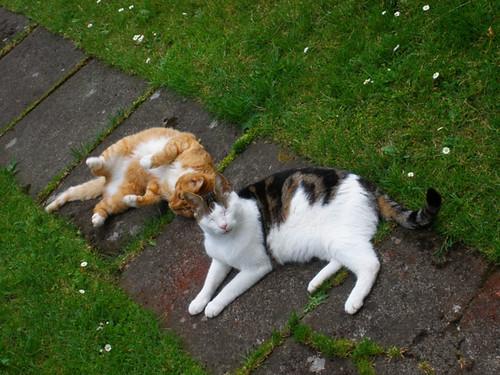 Ginga & Oimo in the garden