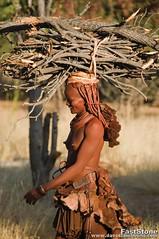 Himba woman in northern Namibia carrying firewood (jitenshaman) Tags: africa people african culture tribal safari afrika tribe ethnic namibia tribo himba afrique ethnology tribu namibie tribus ethnie davestamboulis