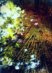 away (phoebe reid) Tags: light water reflections birdbath magic august portal andclosetomyac heatiskeepingmeclosetohome makingduewithpicturesofmyownlittleworld