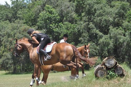 rocking horse 322