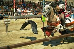 DSC_0099m (UbiMaXx) Tags: show people horse bird race flying interesting nikon eagle action details selection explore knight nikkor roussillon carcassonne languedoc maxx languedocroussillon 2470 twitter chevalerie d700 2470mmf28g ubimaxx