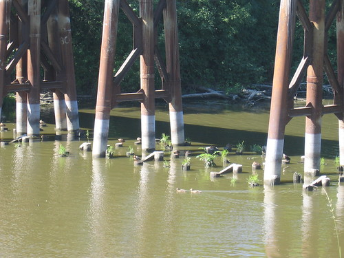 Check out the duckies on the pilings under the bridge