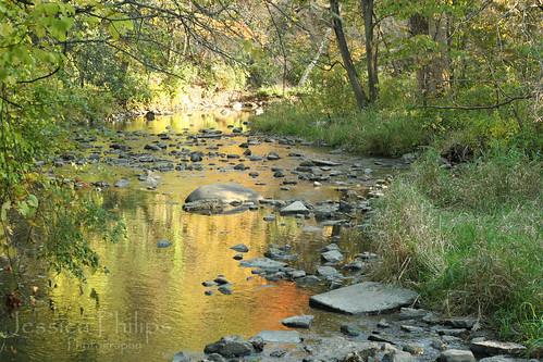 Waterfall Glen Oct2009 013 web