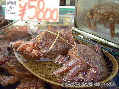 Live hairy crabs