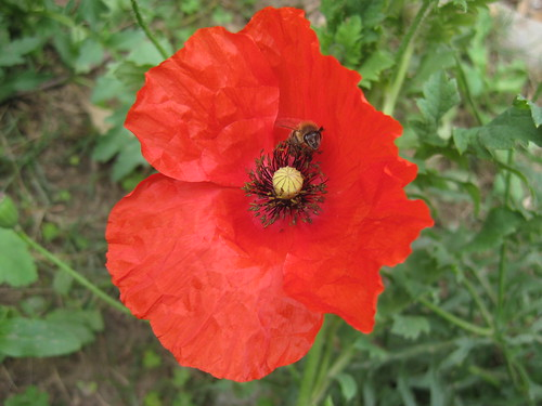 """""""That we find a crystal or a poppy beautiful means that we are less alone, that we are more deeply inserted into existence than the course of a single life would lead us to believe.""""   John Berger (English Painter)"""