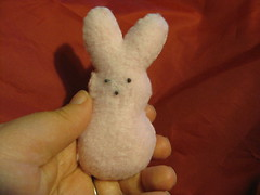 Finished Bunny