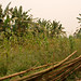Gibbon Experience_5