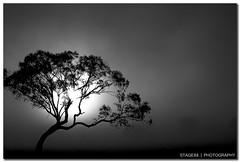 Supermodel (Sam Ili) Tags: park horse sun black silhouette sunrise canon harrison australia canberra act gungahlin 450d redbubble australianphotographerscomp