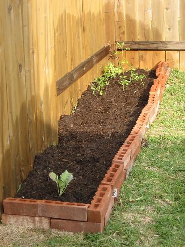 Brand new garden