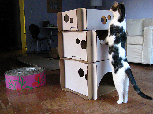 cardboardjunglegym