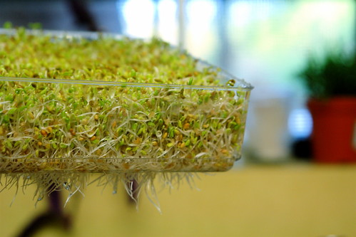 sprouts, day 3