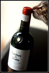 178/365 2009-4-2 My favorite Chilean Wine