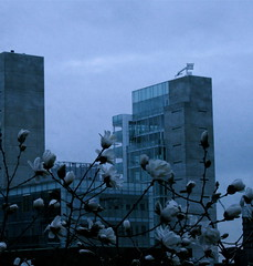 (Rachel Thalia) Tags: flowers nature glass modern buildings spring vs society purity meloncholy modernization industrialization