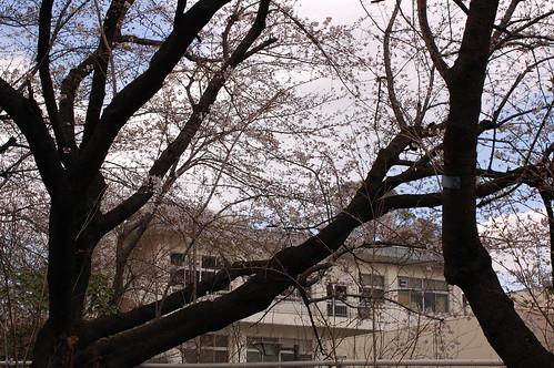Ohanami 2009