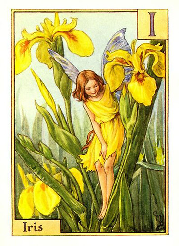 024-iris_flower_fairy