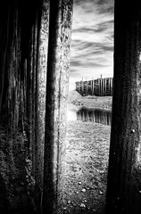 Under a Dock... (The Nature of Things) Tags: bw canada seaweed port fishing dock rocks novascotia mud harbour nikond70s bayoffundy hdr cs3 hallsharbour seafloor photomatix highesttides 3ex niksfilters monochromeaward