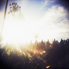 (Rikki  B) Tags: blue sky 120 film clouds holga lomo xpro crossprocessed aqua turquoise country australia sunflare kodakektachromeepr64 mediumformatslidefilm