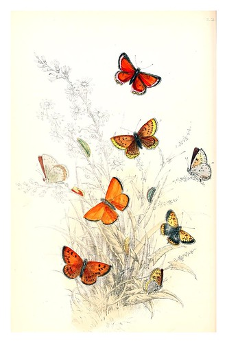 mariposa11