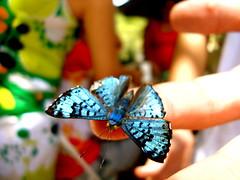 (brunobol11) Tags: macro luz animal natureza borboleta cor destino dedo borboletas cotraste