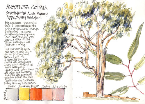 090502 My favourite type of tree