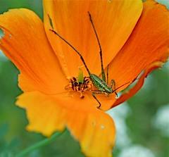 IMG_8518 (PintosPics) Tags: rubyphotographer goldenheartaward artofatmosphere