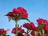 balkon flora (M@do) Tags: olympus e3 polar zuiko hoya naturesfinest flowerotica mywinners bigfave abigfave anawesomeshot goldenphotographer citrit cirkular