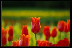 Longwood Garden_ (XJPHOTO) Tags: wood flowers macro garden long pentax xj  longwoodgarden sp90  k10d pentaxk10d  xjphoto