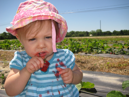 Strawberry Picking-7