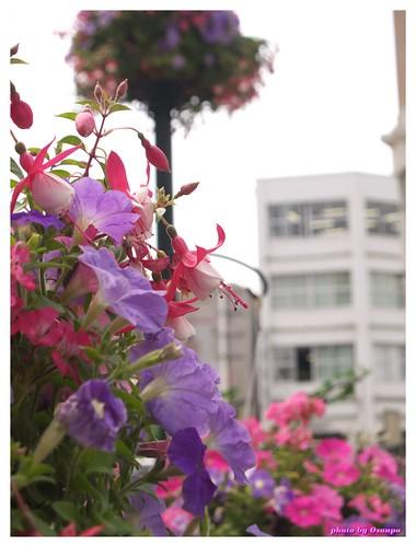 Horikawa Flower Festival 20090327 #01