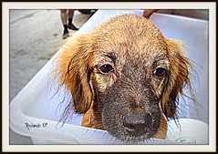 Puppy in a basin (*Amanda Richards) Tags: brown black puppy nose furry basin picnik