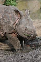 Rhino baby (Mandy Verburg) Tags: baby animal zoo blijdorp rhino dier animalpark dierentuin neushoorn