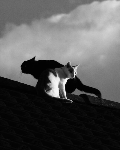 Cats on a Roof 21758