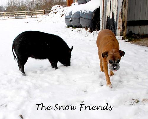 snowfriends copy