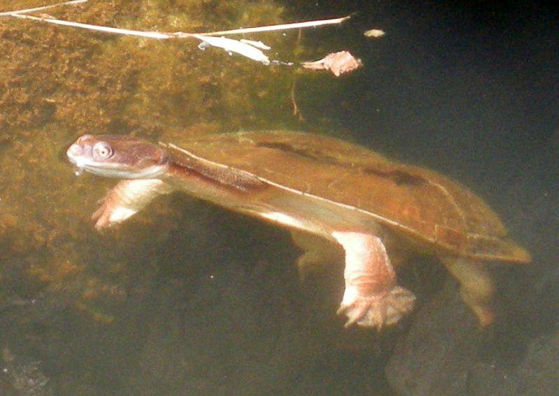 tortoise up close