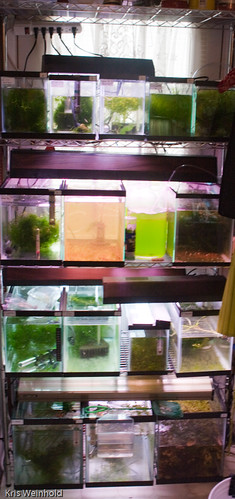 Guppy, Daphnia, Shrimp, and More!