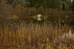 Boathouse, Loch Ard (Nurmanman) Tags: trees lake scotland highlands forrest stirling loch trossachs lochlomond aberfoyle lochard aplusphoto goldstaraward