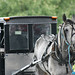 Grey Horse and buggy
