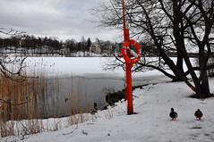 Red buoy, or another way of saying Rescue Me! (Poupetta) Tags: winter snow finland helsinki ducks buoy tlbay