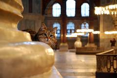 The cat in Haya Sophia (Sinaloa237) Tags: cat turkey chat istanbul mosque turquie gato saintesophie hayasophia