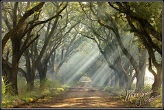 Smoky Plantation (MikeJonesPhoto) Tags: nature landscape la louisiana photographer scenic professional 0672 mikejonesphoto smithsouthwestern wwwmikejonesphotocom