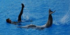 Los espectáculos, señalan, son la actividad más riesgosa y mortal para los delfines, por lo que demandan su prohibición        Mediterraneo Marine Park --- Malta (CaptiveDolphins-vs-WildDolphins) Tags: malta dolphins shame delphinarium malte mediteraneo maltagozo marinelands mediterraneomarinepark captivedolphins themediteranneomarineparkinmaltaisashame unehonte unaverguenza dauphinscaptifs themediteranneomarineparkinsliemathemediteranneomarineparkinmalta themediteranneomarinepark dauphinsdelfines delfinescautivos