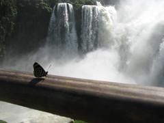 IMG_0492 (killedbysnusnu) Tags: argentina südamerika cataratasdeliguazú