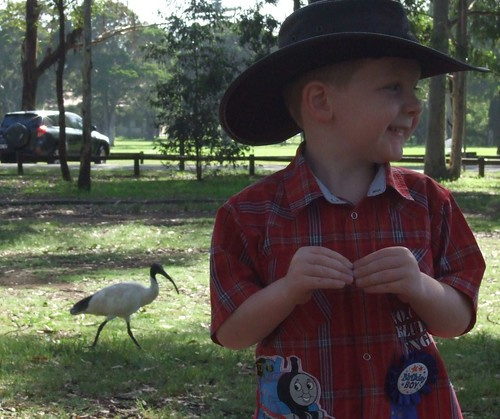 Willem and the Ibis
